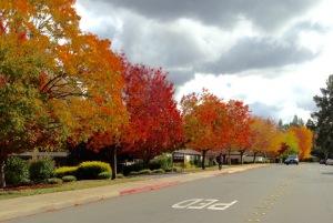 Rossmoor Trees III 11-25-15
