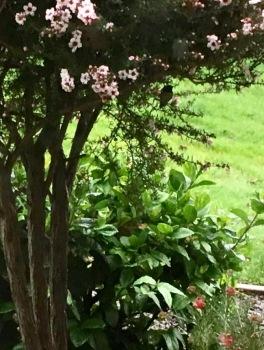 hummingbird-resting-2