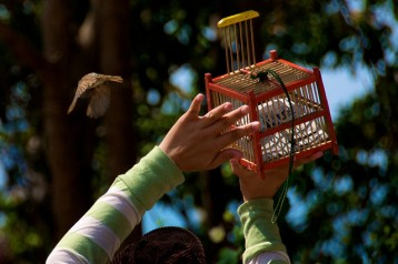 Releasing Bird from Cage