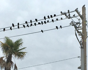 Birds on Telephone Pole