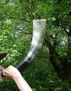 Blowing animal horn